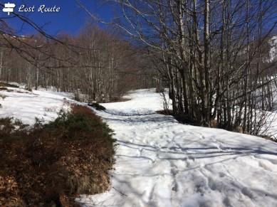 Il sentiero tra gli alberi, ricoperto di neve
