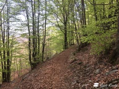 Sentiero nel bosco verso il Monte Borla