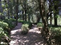 Camminamenti tra alberi e cespugli