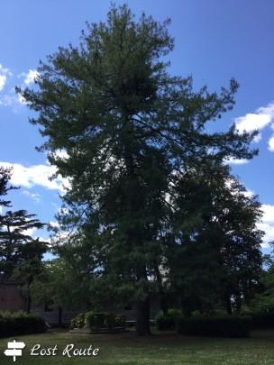 Un albero monumentale in giardino