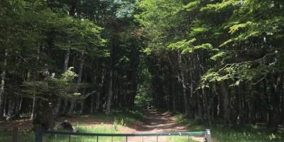 Prato alla Penna, direzione Foresta della Lama