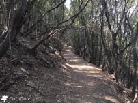 Il sentiero per Giglio Campese